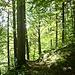Unterwegs im Mischwald oberhalb des Lainbachs.