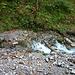 Die Quelle des Kesselbachs: Unvermittelt tritt das glasklare Wasser aus dem Untergrund hervor an die Oberfläche und speist den Bach.