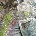 """Il sentiero attrezzato del fiume Questo ponte comincia a essere un po"""" marciotto""""."""