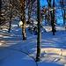 Skitour Helfenberg vom 5.2.2019:<br /><br />Meine zwei Tage alte Skispur hinauf durch die Südflanke zum Grat war schon wieder fast zugeschneit.