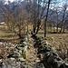 Il sentiero che sale da Argnaccia a Cangello.
