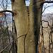 Das Alter des Drahtseils lässt sich anhand des Baumwuchses erahnen...