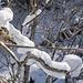 Immer wieder Staunen wir, wie viel Schnee auf den Bäumen zu liegen kommt