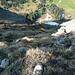 Abschüssiges Gras kurz unter der Schlüsselstelle des Tierberg Nordanstiegs