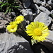 Meine Botanikkenntnisse sind leider miserabel...aber schön gelb :-)