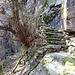 weitere Stufen, hier gibt es sogar eine Sicherung am Felsen. Ist ja noch der markierte Wanderweg.