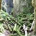 im Canyon du Buement III