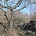 Eintritt in ortstypisches Fels-Eichen-Dornen-Gemisch