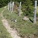 Einstieg in die Südflanke des Widderfelds