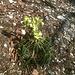 Der Frühling erwacht auch hier - wenn jemand weiß, welche Pflanze hier bald ihre Knospen öffnet, freue ich mich über die Info.