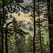 Und los geht's: Nach dem Halleinerhaus erstmal durch den Wald: Talblick durch die Bäume.