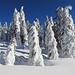 Tief verschneite Bäume