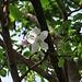 Apfelbaumblüte / fiore di un melo