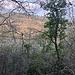 Auf dem Pfad zum Castellberg-Aussichtsturm.