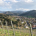 Weiter geht es durch die Reben entlang des Castellbergs oberhalb von Sulzburg  ...