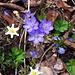 auch im Wald ist der Frühling überall spürbar