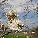 und genießen die ersten Frühlingsblüten an den Bäumen