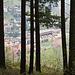 Am Waldrand oberhalb von Seebach haben die Bäume mit dem Sägewerk im Tal leider wohl auch direkt ihr Ende ständig im Blick :-/
