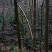 Ein seltener Anblick: der Länge nach gespaltener Baum. Durch was auch immer ...