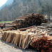 grosse Holzwirtschaft in dieser Gegend