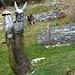 curiosa statua lignea nei pressi della fattoria dei lama