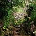 Schon mit dem ersten Schritt vom Wanderweg auf den Mount Scenery betrat ich den unglaublich schönen Regenwald. Es ging auch sogleich über die ersten Treppenstufen steil aufwärts.