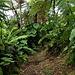 Der kleine Umweg im Mittelteil des Abstiegs über Bud's Mountain Trail war sehr bequem zu begehen weil er keine Treppenstufen hatte.