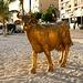 Goldige Kuh am Strand von Philipsburg.