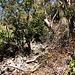 Der Pfad durch den Trockenwald über den Südgratrücken ist immer wieder mit roten Punkten markiert.