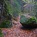 Schöner Waldweg an den Zastler Eislöchern.