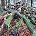 Viel totes Holz liegt im Wald herum.