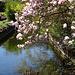 mehr Blüten in Aufhausen