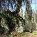 die Wurzeln des Baumes haben den Fels umkrallt und durchzogen, als ob beide zwingend zusammen gehören