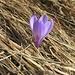 kurz vor Bivio meldet sich dann doch der Frühling