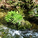 grünes Inselchen im Wasser