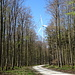 man wandert lange durch den Wald und meist hört man die Windräder, manchmal sieht man sie auch