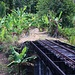"""Bei Wingfried Estate ist steht eine interessante Brücke der ehemaligen Zuckerrohrbahn. Die Gleise rund um die Insel Sankt Kitts wurden von 1912 bis 1926 verlegt, um Zuckerrohr von den Plantagen in die damals neu gebaute Zuckerfabrik in Basseterre zu bringen. Die """"Saint Kitts Scenic Railway"""" befährt heute die Strecke mit Touristenzügen."""
