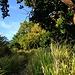 Zuerst wanderte ich auf durch hohes Gras fast zugewachsene Wege in Richtung Regenwald direkt auf den Mount Liamuiga zu. Hier erkannte ich auch eine erste gelbe Markierung um einen Baum, ich musste also den richtigen Pfad erwischt haben.