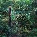 Ein erster Stacheldrahtzaum passierte ich nach etwa einer Viertelstunde als ich in den noch lichten Regenwald eintauchte. Bis hierher war früher noch Kulturland gewesen wo sich nun die üppige Natur wieder ausbreitet.