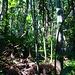 Vor lauter Bäumen sieht man den Wald nicht :-)