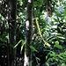 Eine der letzten Markierungen die ich antraf. Bald war kein frisch gesäuberter Pfad mehr erkennbar und ich versuchte hier mehrere Varianten ob es irgendwo weiter gehen würde. Doch der Wald war so dicht, dass ich in einem Tag unmöglich den Gipfel hätte erreichen können. So rastete ich nochmals und wanderte zurück zum Ausgangspunkt.