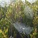 Spinnweben im Abstieg