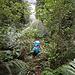 Dichter Busch im Abstieg zum Sindbad Gully