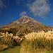 Mount Taranaki vom Viewpoint beim Visitor Center. Es wird unser einziges Foto bleiben, das den Vulkan unverhüllt zeigt.