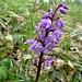 Wohl eine Orchidee