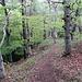 Eine schöne Route verläuft über den Sporn zwischen Tal und Ellhorn