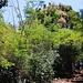 Roseau: Vom Botanischen Garten kann man auf den Hügel Morne Bruce zum Stadtviertel Kings Hill hochwandern. Der Weg ist sehr schön und beliebt. Dennoch lassen sich viele Touristen einfach mit dem Bus oder Taxi  hochfahren.