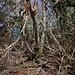 West Cabrit (171m): Ich suchte im dichten Wald nördlich des Aussichtspunktes nach dem höchsten Punkt des Hügels. Einen Vermesungspunkt fand ich nicht, aber diese Stelle müsste der höchste Punkt des Hügels sein.