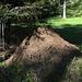 opere di grande, grande lavoro da parte delle formiche: ci sono volute decine di anni per queste imponenti costruzioni: NON DISTRUGGIAMOLE!