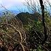 Plötzlich stand ich über dem Nebel und die Vegetation änderte sich von Bergnebelwald zu Wald mit niedrigeren Bäumen. Hier konnte ich durch eine kleine Lücke auch überaschenderweise zum nördlich gelegenen, namenlosen, zirka 1150m hohen Nachbargipfel sehen.